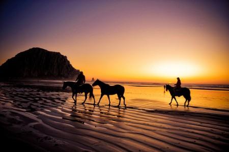 Projektmanagement und Pferde reiten (Quelle flickr.com von tibchris)